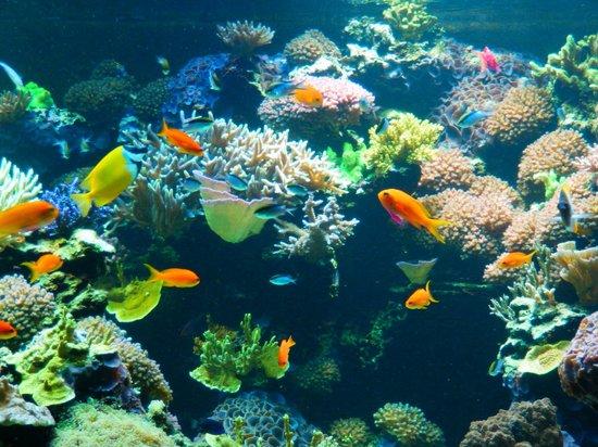 Pretty Fish Picture Of Vancouver Aquarium Vancouver Tripadvisor