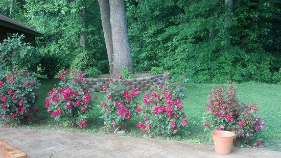 Natchez Hills Vineyard: By the patio