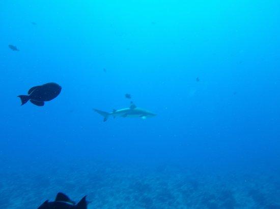 Eleuthera Bora Diving Center