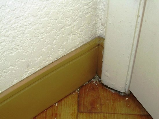 La Quinta Inn Deerfield Beach I-95 at Hillsboro E: cat litter in the corner