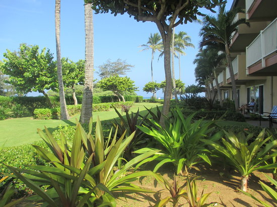 Kauai Coast Resort at the Beachboy: Beachboy Garden Area