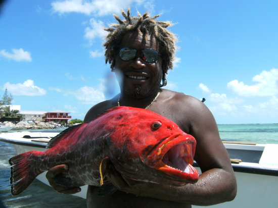 Bimini Hidden Treasures: Brown with a yellow  wing grouper
