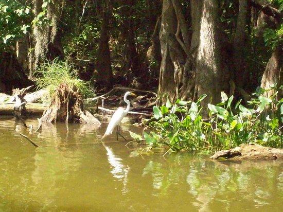 The Rusty Anchor: Heron 11 Dora Canal June 2013