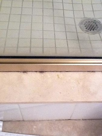 Sea Spray Resort on Siesta Key: Mold in Shower