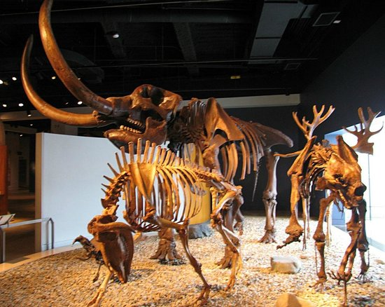 Indiana State Museum: 3 Beasts of Ancient Indiana