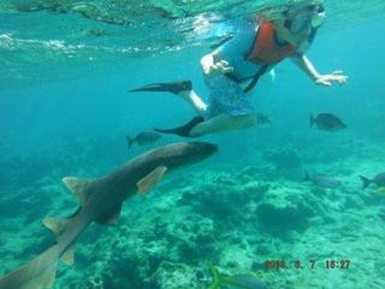 Gibbs Cay : Skyler and the shark!!