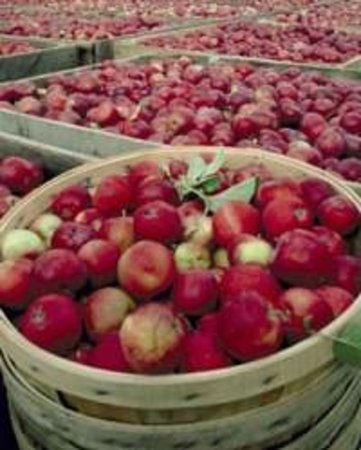 Serenity on the Lake Bed and Breakfast: Applefest Harvest Time