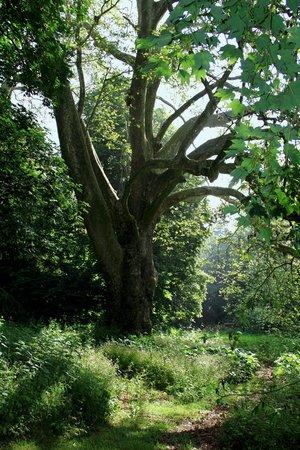 Château du Quengo : arbres centenaires