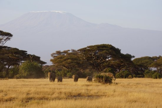 Tawi Lodge: The magnificent Mt Kilimanjaro from the porch of our bungalow .... SPECTACULAR!