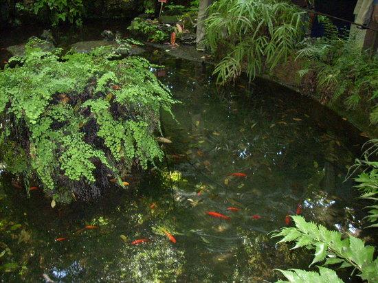 Orto botanico di napoli laghetto con pesci rossi foto for Pesci rossi laghetto