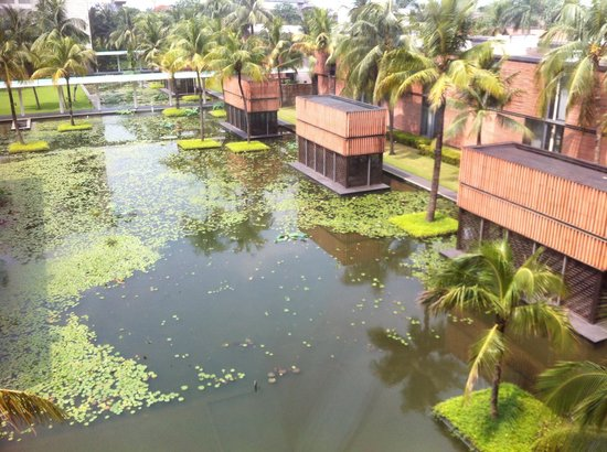 ITC Sonar : view of lilypond from Tower Room