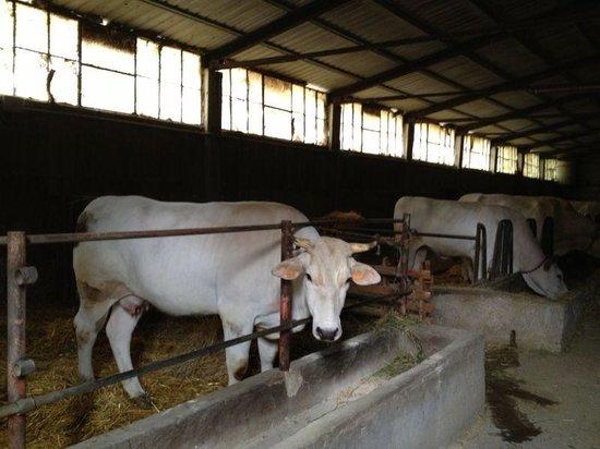 Agriturismo Casale dei Frontini: La stalla