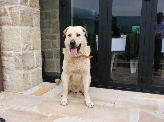 Ellauri Hotela: gorgeous friendly dog at the hotel