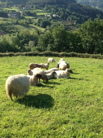 Ellauri Hotela: beautiful views and sheep