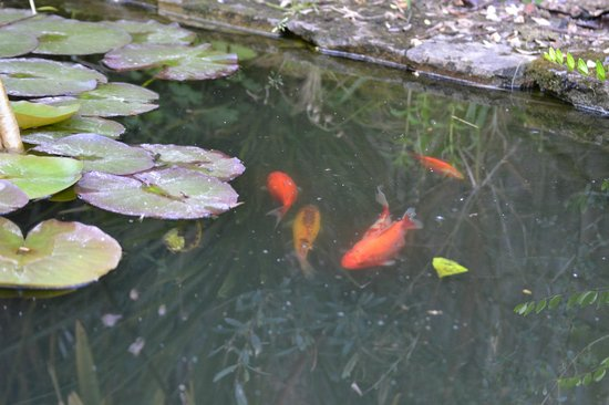 Bootham Gardens Guesthouse: Bootham Gardens pond