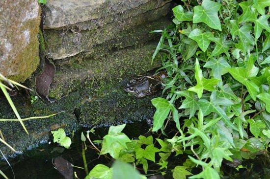 Bootham Gardens Guesthouse: Bootham Gardens wildlife