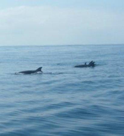 Onca Explorations: dolphin pod