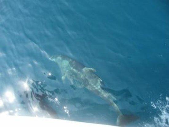 Onca Explorations: underwater