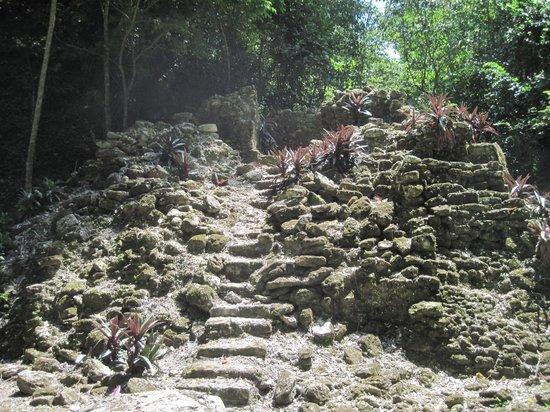La Milpa Field Station: La Milpa mayan site