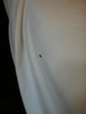 Super 8 Johnstown : This is the bug crawling in the bed