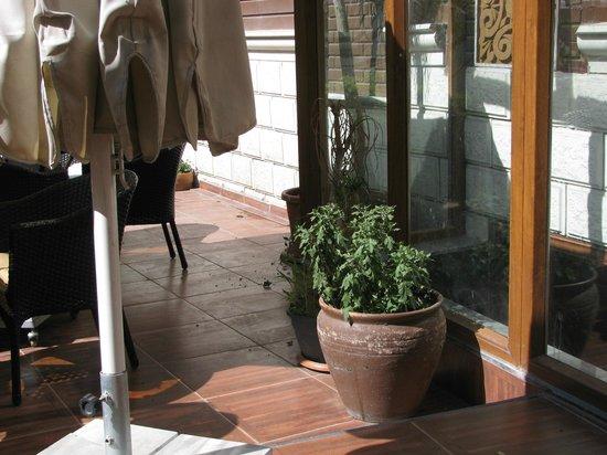 Lausos Hotel: Giardino molto triste...