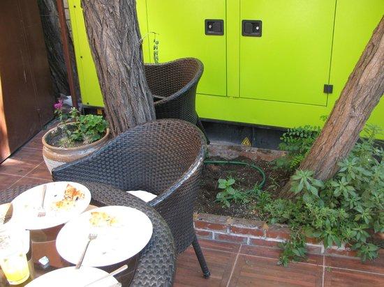 Lausos Hotel: Giardino: gabinetto dei gatti!