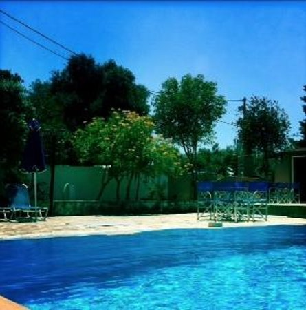 Olive Grove Studios/Apartments: Olive grove Pool area, plenty of sunbeds and a bar