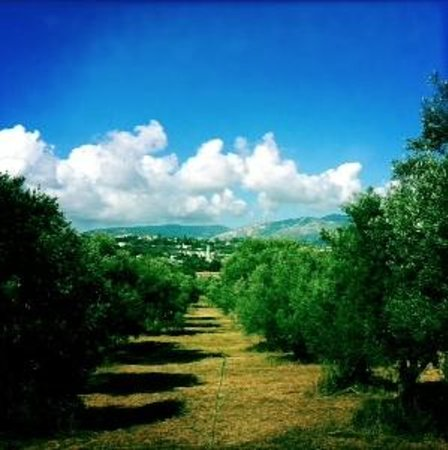 Olive Grove Studios/Apartments: 5 mins walk way… in countryside nearby