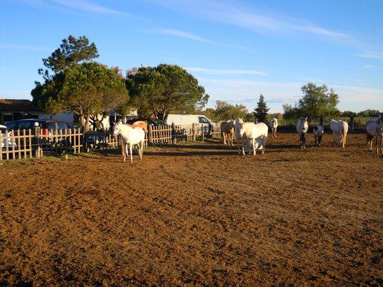 Auberge de la Fadaise: 牧場