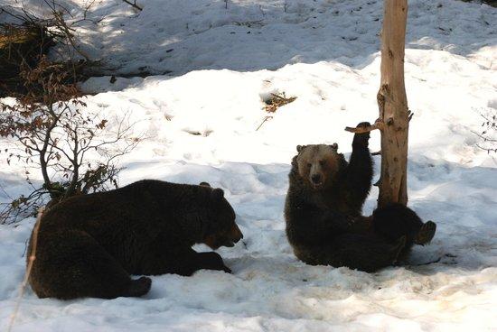 Tier-Freigelande - Nationalpark Bayerischer Wald: Bears at Neushonau