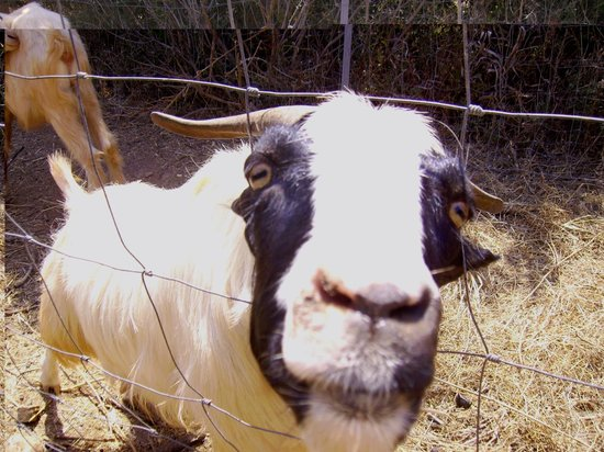 Agriturismo Nurazzolas: anche lei fa parte dello staff di nurazzolas