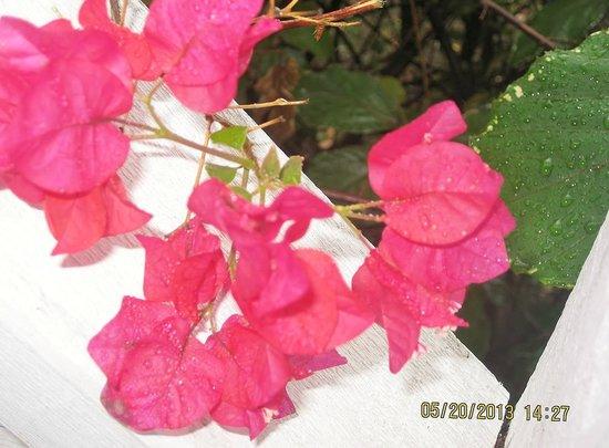 Cocobay Resort: Beautilful flowers