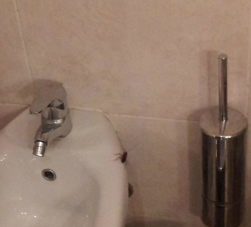 Movenpick Hotel Cairo-Media City: Cockroach in bathroom