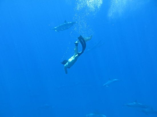 Captain Steve's Rafting : Encountered a pod of dolphins