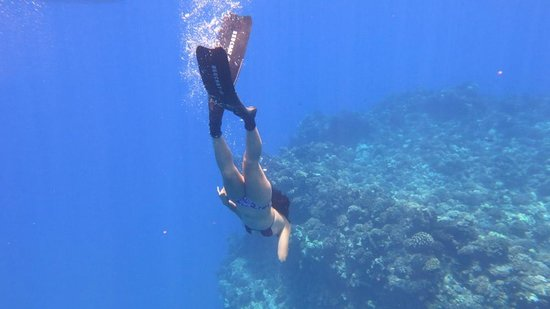 Captain Steve's Rafting : Diving down during a snorkel...