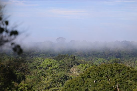 Amazon Explorama Lodges: view over the rainforest from canopy walkway