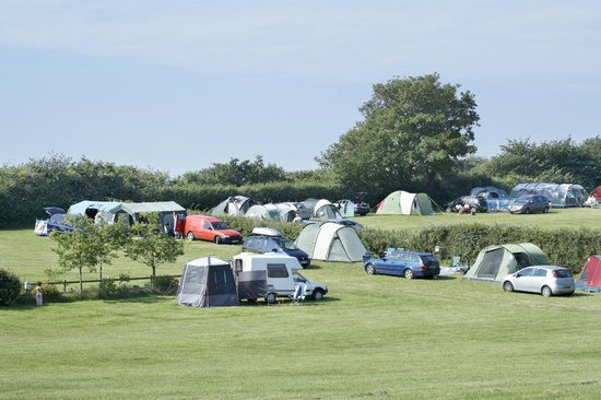 Midfield and hedge pitches at Leadstone Camping