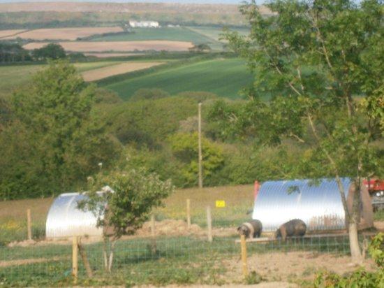 Rosewyn Farmhouse: View