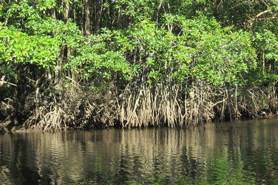 Cherating River : River Mangrove Cruise