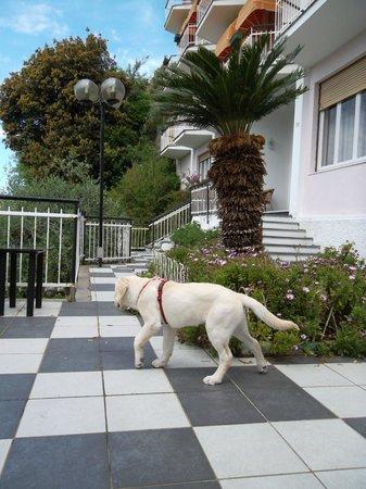 Hotel Mediterraneo: Aufgang zur Rezeption