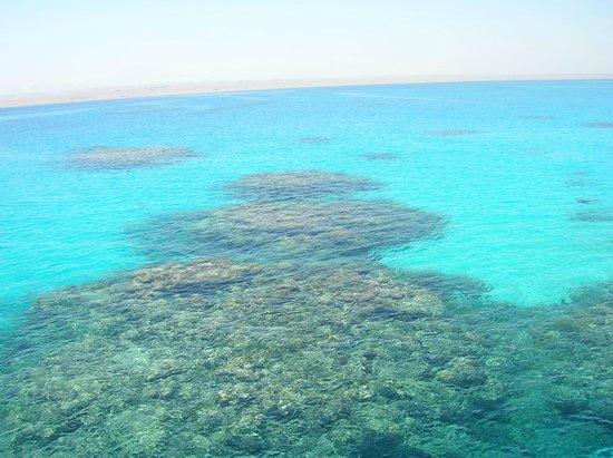 Emperor Divers Hurghada - Day Tours : Het rif