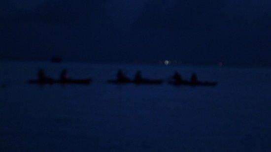 Cayman Kayaks: Kayaks departing to bio bay