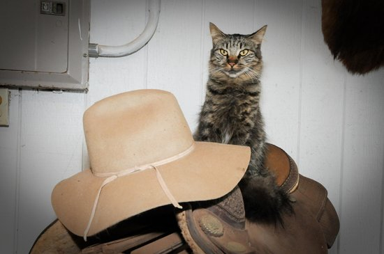 Mendes Ranch: A few cats are always a good sign !