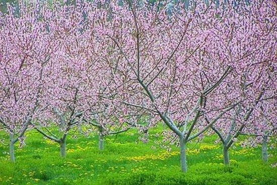 Sunnybrook Winery: Orchard