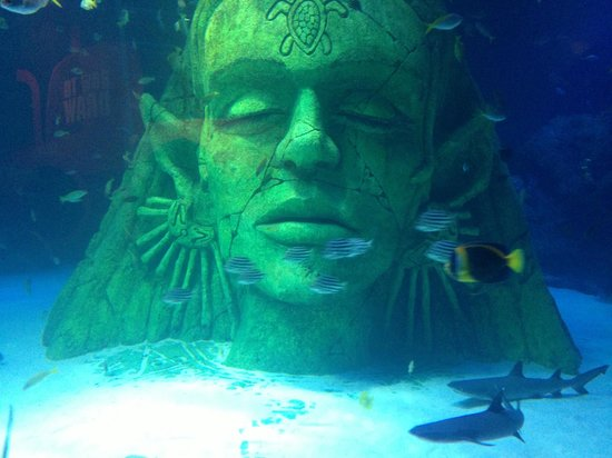 ... area to SEALIFE Manchester - Picture of Sea Life Manchester, Stretford