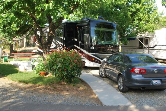 Auburn Gold Country RV Park : Very nice sites for all sizes of RVs