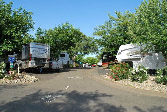 Auburn Gold Country RV Park : Random shot of pull-through spaces