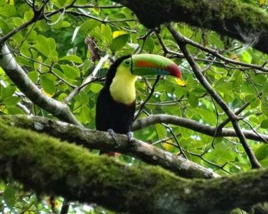 Caribe Town: Tucan; photo taken from our porch