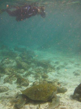 Casa Iguana Mar y Sol: Snorkeling at La Loberia