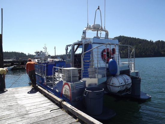 Deception Pass Tours: Getting on boat